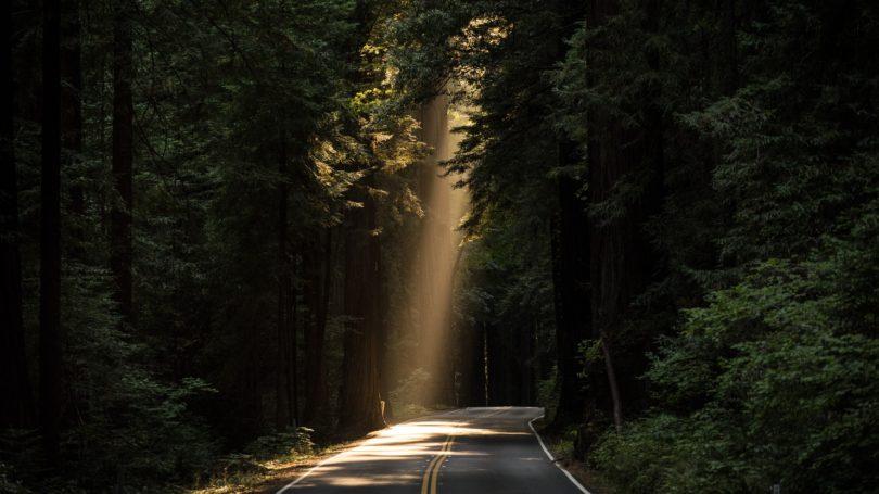 Angel By The Roadside